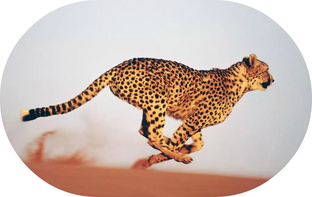 Strengths into action Cheetah Round 1024x647