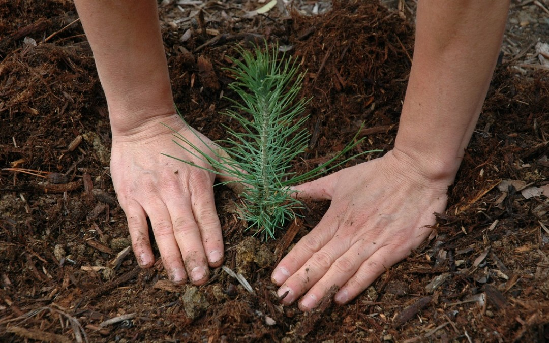 Defining Our Strengths: Uncovering New Seeds For Success