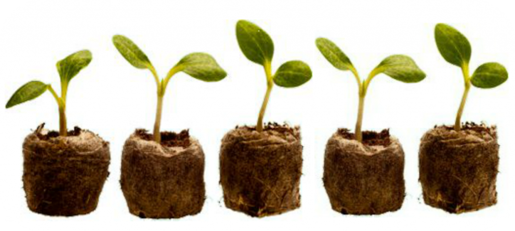 Five Alive Sprouts 1233x555